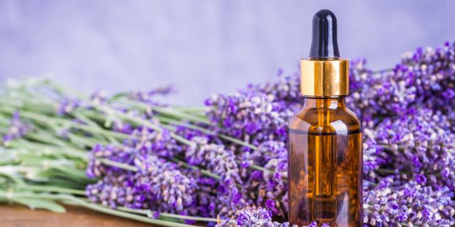 Lavender essential oil for aromatherapy